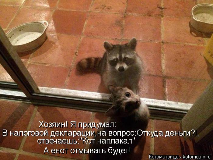 """Котоматрица: Хозяин! Я придумал: отвечаешь:""""Кот наплакал"""" В налоговой декларации,на вопрос:Откуда деньги?!, А енот отмывать будет!"""