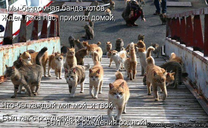 Котоматрица: Мы-бездомная банда котов, Ждем пока нас, приютят домой, Что-бы каждый миг мой, и твой, Был как с рождения,родной! Был как с рождения родной!