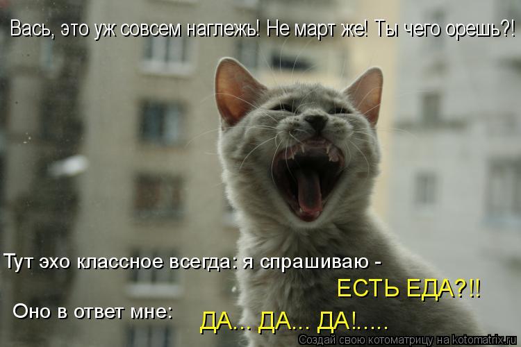 Котоматрица: Тут эхо классное всегда: я спрашиваю -  ЕСТЬ ЕДА?!! Оно в ответ мне: ДА... ДА... ДА!..... Вась, это уж совсем наглежь! Не март же! Ты чего орешь?!