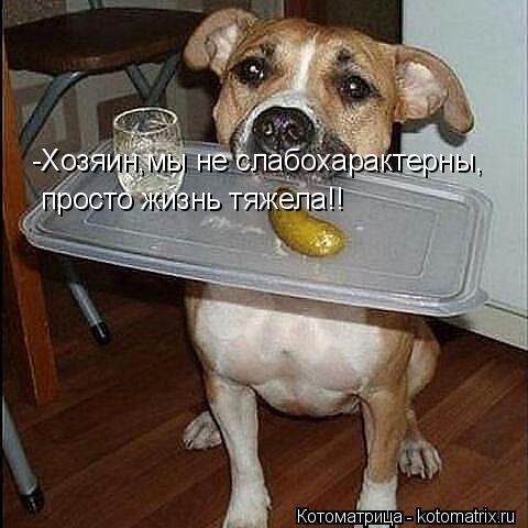 Котоматрица: -Хозяин,мы не слабохарактерны, просто жизнь тяжела!!