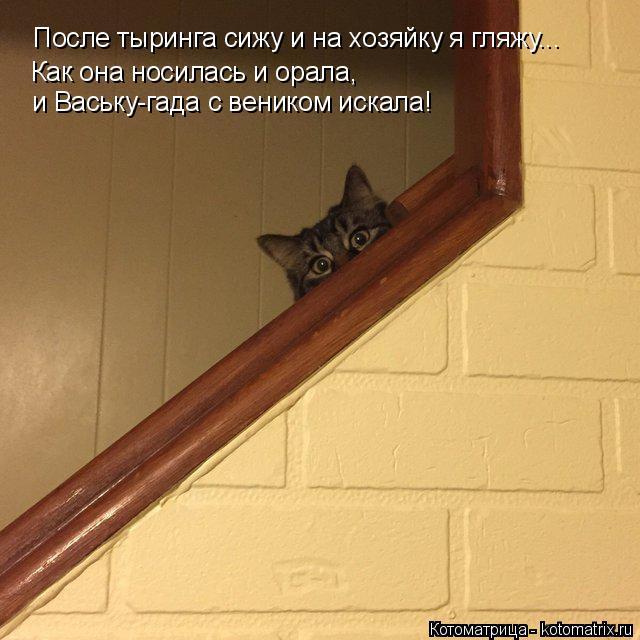 Котоматрица: После тыринга сижу и на хозяйку я гляжу... Как она носилась и орала, и Ваську-гада с веником искала!