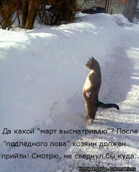 """Котоматрица: Да какой """"март высматриваю""""? После """"подлёдного лова"""" хозяин должен прийти! Смотрю, не свернул бы куда..."""