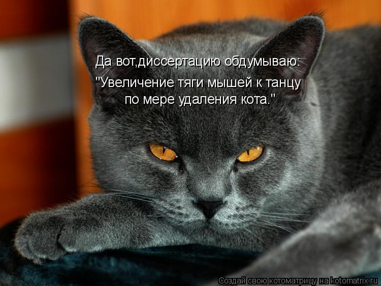 """Котоматрица: """"Увеличение тяги мышей к танцу по мере удаления кота."""" Да вот,диссертацию обдумываю:"""