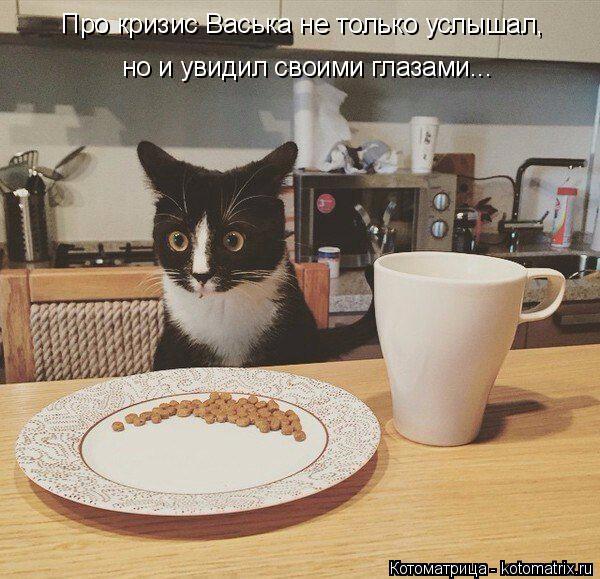 Котоматрица: Про кризис Васька не только услышал, но и увидил своими глазами...