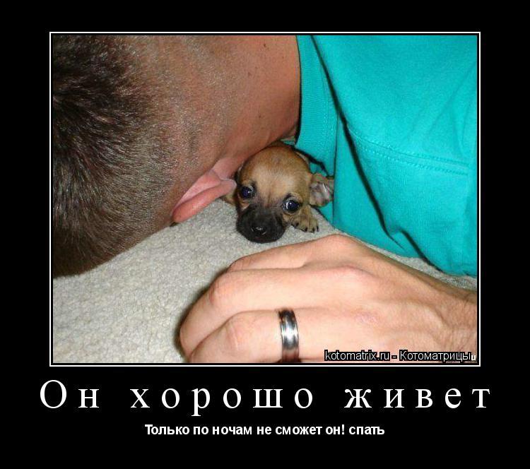 Котоматрица: Он хорошо живет Только по ночам не сможет он! спать