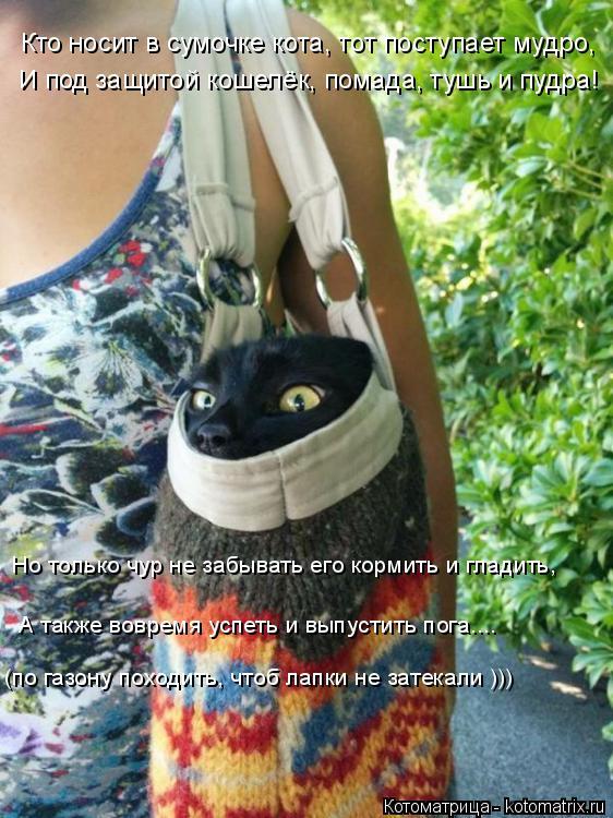 Котоматрица: Кто носит в сумочке кота, тот поступает мудро,  И под защитой кошелёк, помада, тушь и пудра! Но только чур не забывать его кормить и гладить,  А