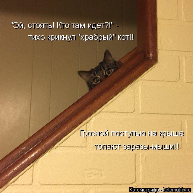 """Котоматрица: """"Эй, стоять! Кто там идет?!"""" - тихо крикнул """"храбрый"""" кот!! Грозной поступью на крыше  топают заразы-мыши!!"""