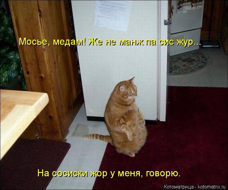 Котоматрица: Мосье, медам! Же не манж па сис жур... На сосиски жор у меня, говорю.