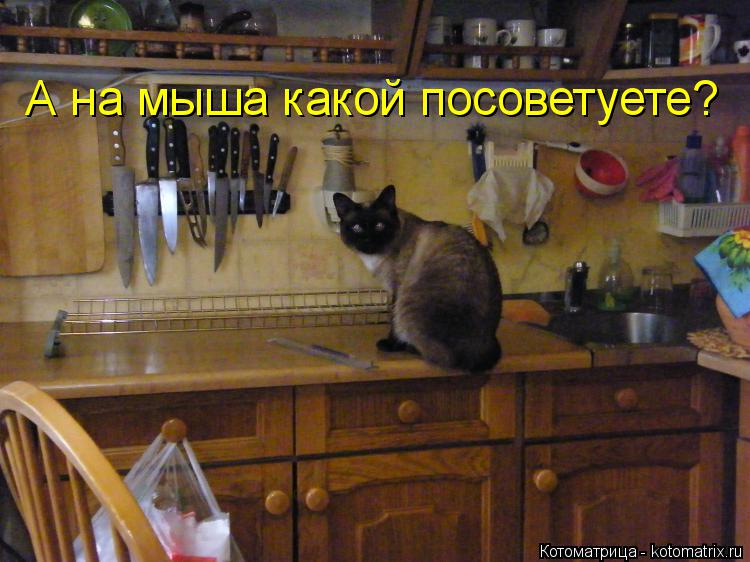 Котоматрица: А на мыша какой посоветуете?