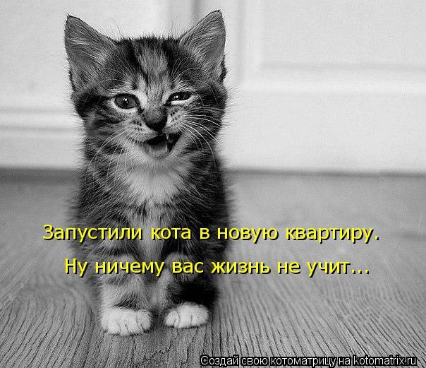 Котоматрица: Запустили кота в новую квартиру. Ну ничему вас жизнь не учит...