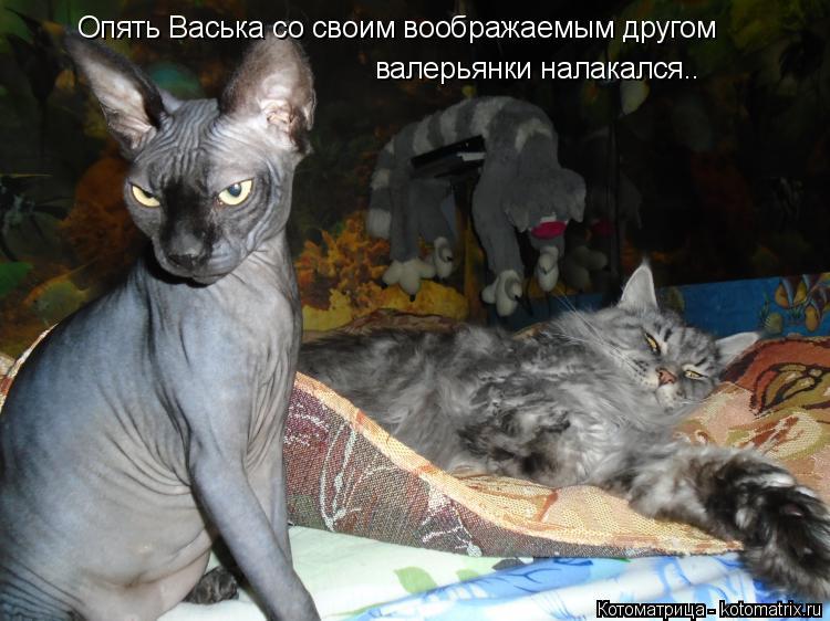 Котоматрица: Опять Васька со своим воображаемым другом  валерьянки налакался..
