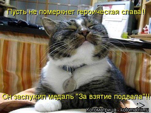 """Котоматрица: Пусть не померкнет героическая слава!! Он заслужил медаль """"За взятие подвала""""!!"""
