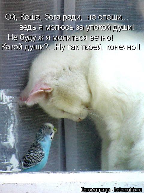 Котоматрица: Ой, Кеша, бога ради,  не спеши... ведь я молюсь за упокой души! Не буду ж я молиться вечно! Какой души?...Ну так твоей, конечно!!