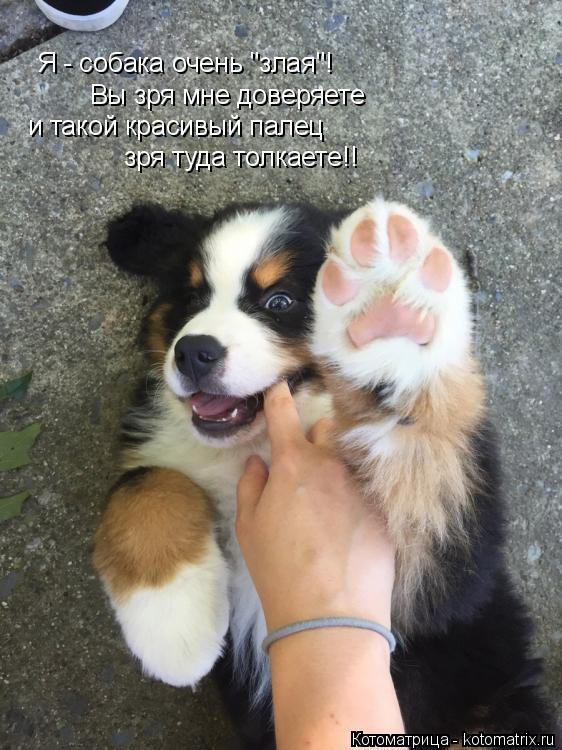 """Котоматрица: Я - собака очень """"злая""""! Вы зря мне доверяете и такой красивый палец зря туда толкаете!!"""