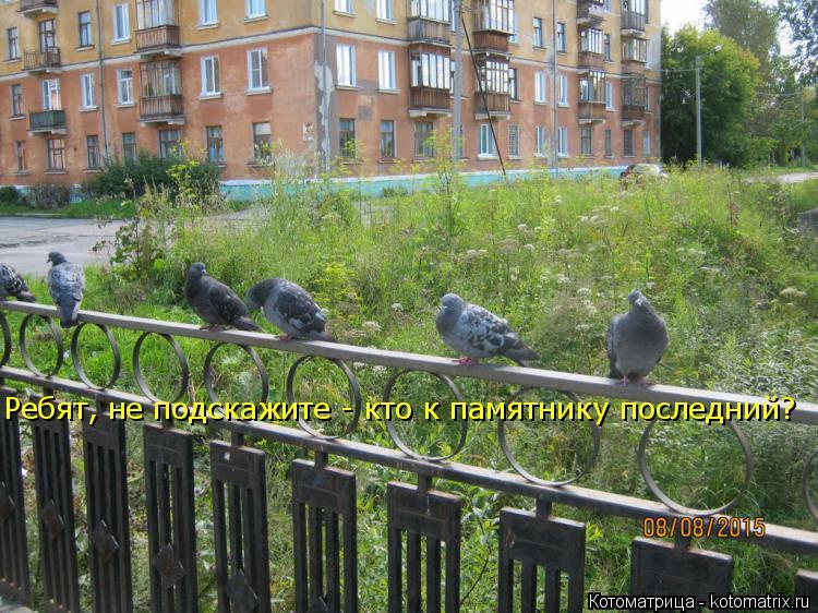 Котоматрица: Ребят, не подскажите - кто к памятнику последний?