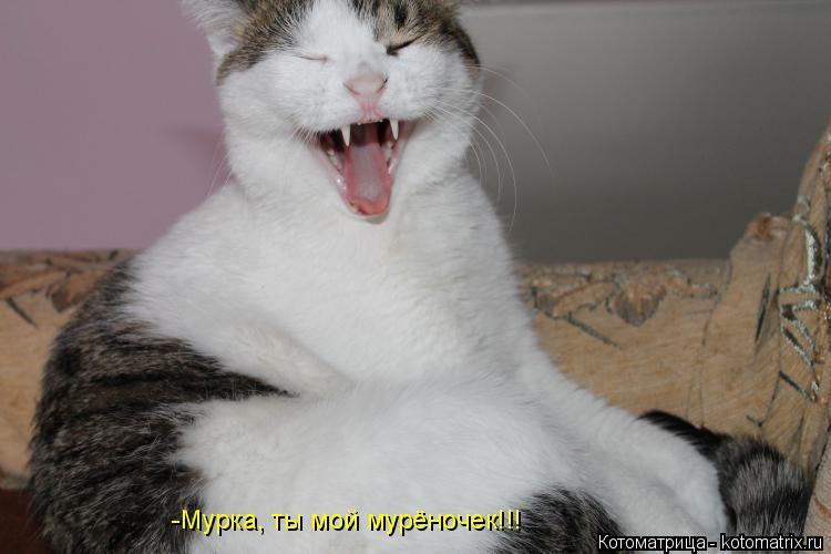 Котоматрица: -Мурка, ты мой мурёночек!!!