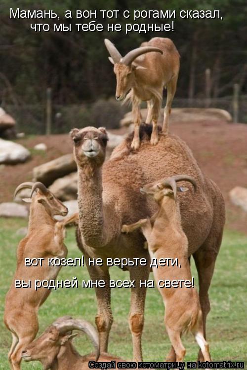 Котоматрица: Мамань, а вон тот с рогами сказал, что мы тебе не родные! вот козел! не верьте дети, вы родней мне всех на свете!