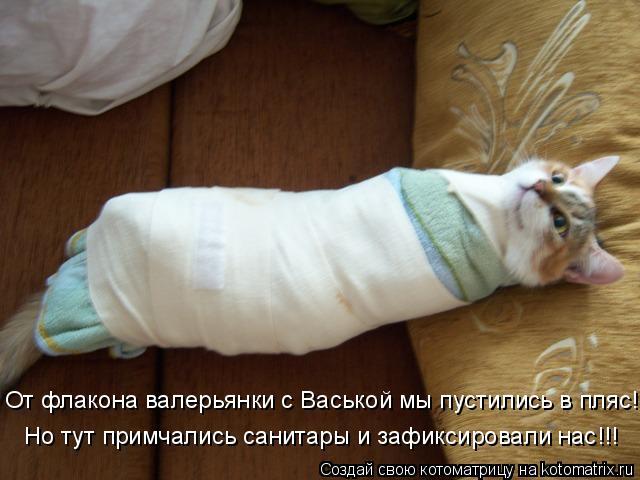 Котоматрица: От флакона валерьянки с Васькой мы пустились в пляс! Но тут примчались санитары и зафиксировали нас!!!