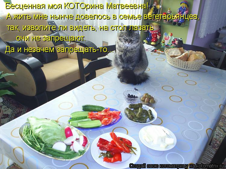 Котоматрица: Бесценная моя КОТОрина Матвеевна! А жить мне нынче довелось в семье вегетарьянцев,  так, изволите ли видеть, на стол лазать они не запрещают.