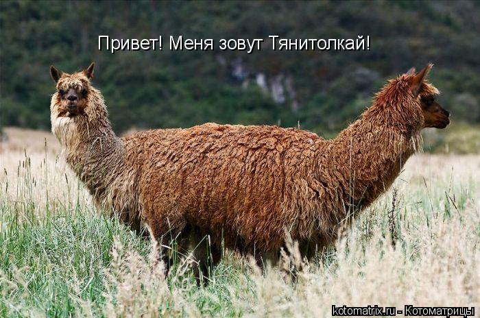 Котоматрица: Привет! Меня зовут Тянитолкай!