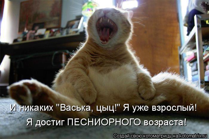 """Котоматрица: И никаких """"Васька, цыц!"""" Я уже взрослый! Я достиг ПЕСНИОРНОГО возраста!"""
