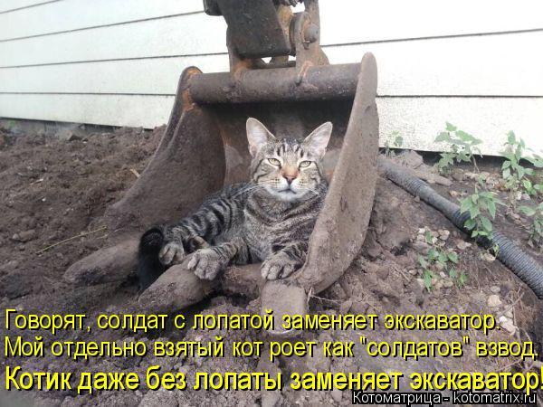 """Котоматрица: Котик даже без лопаты заменяет экскаватор! Мой отдельно взятый кот роет как """"солдатов"""" взвод. Говорят, солдат с лопатой заменяет экскаватор."""