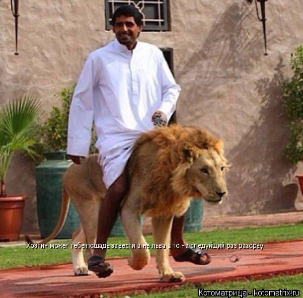 Котоматрица: Хозяин может тебе лошадь завести а не льва а то на следуйщий раз разорву!