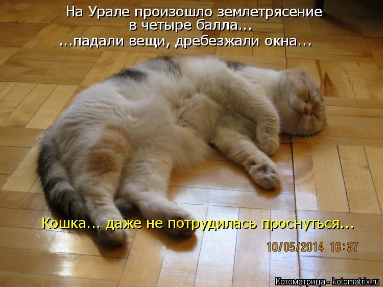 Котоматрица: На Урале произошло землетрясение в четыре балла... ...падали вещи, дребезжали окна... Кошка... даже не потрудилась проснуться...