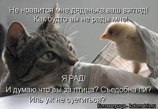 Котоматрица: Не нравится мне,дяденька,ваш взгляд! Как будто вы не рады мне! Я РАД! И думаю,что вы за птица? Съедобна ли? Иль уж не суетиться?