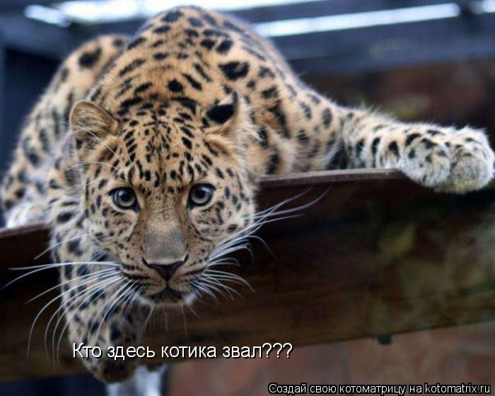 Котоматрица: Кто здесь котика звал???