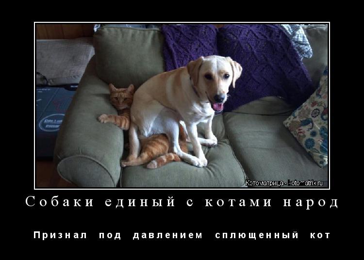Котоматрица: Собаки единый с котами народ П р и з н а л     п о д     д а в л е н и е м     с п л ю щ е н н ы й     к о т