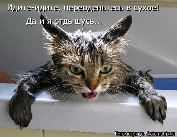 Котоматрица: Идите-идите, переоденьтесь в сухое! Да и я отдышусь...