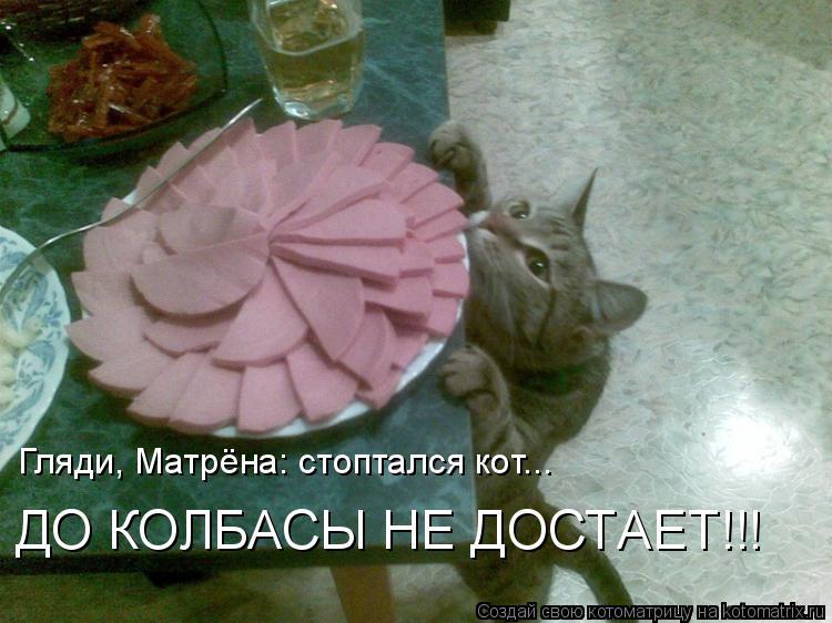 Котоматрица: Гляди, Матрёна: стоптался кот... ДО КОЛБАСЫ НЕ ДОСТАЕТ!!!