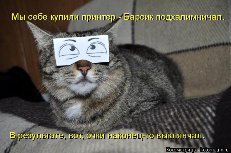 Котоматрица: Мы себе купили принтер - Барсик подхалимничал. В результате, вот, очки наконец-то выклянчал.