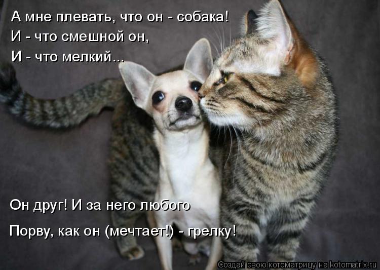Котоматрица: А мне плевать, что он - собака! Он друг! И за него любого Порву, как он (мечтает!) - грелку! И - что смешной он,  И - что мелкий...