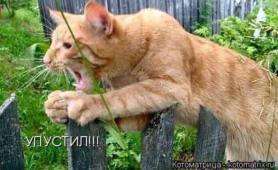 Котоматрица: УПУСТИЛ!!!