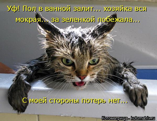 Котоматрица: Уф! Пол в ванной залит... хозяйка вся мокрая... за зеленкой побежала... С моей стороны потерь нет...