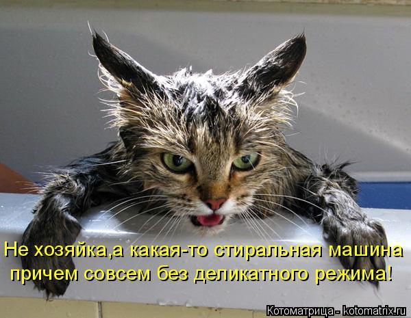 Котоматрица: Не хозяйка,а какая-то стиральная машина причем совсем без деликатного режима!