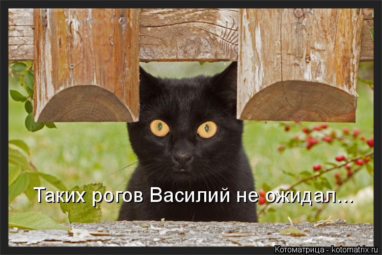 Котоматрица: Таких рогов Василий не ожидал...