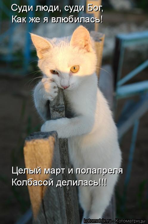 Котоматрица: Суди люди, суди Бог, Как же я влюбилась! Целый март и полапреля Колбасой делилась!!!