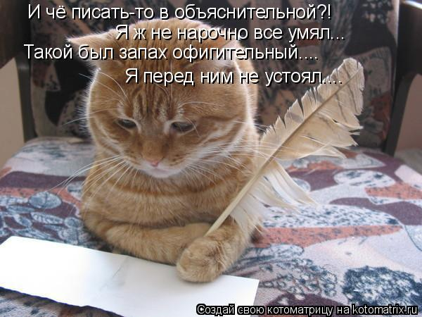 Котоматрица: И чё писать-то в объяснительной?! Я ж не нарочно все умял... Такой был запах офигительный.... Я перед ним не устоял....