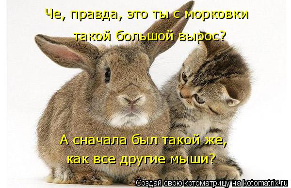 Котоматрица: Че, правда, это ты с морковки   такой большой вырос? А сначала был такой же,  как все другие мыши?