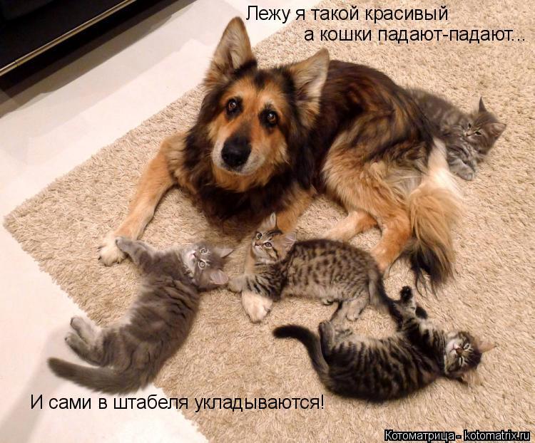 Котоматрица: И сами в штабеля укладываются! Лежу я такой красивый а кошки падают-падают...
