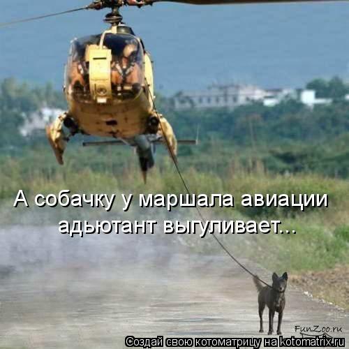 Котоматрица: А собачку у маршала авиации адьютант выгуливает...