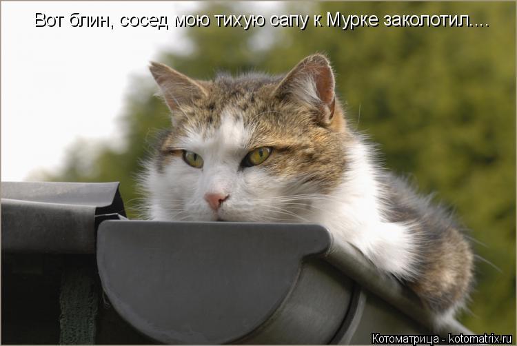 Котоматрица: Вот блин, сосед мою тихую сапу к Мурке заколотил....