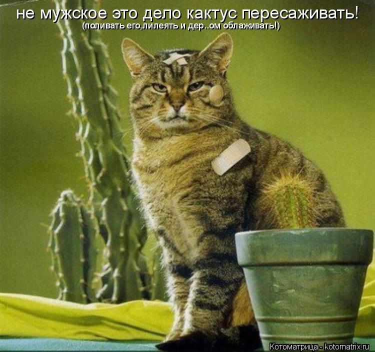 Котоматрица: не мужское это дело кактус пересаживать! (поливать его,лилеять и дер..ом облаживать!)