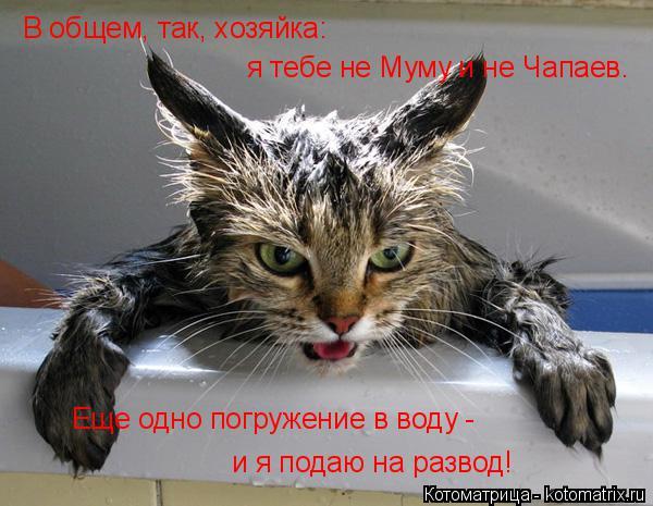 Котоматрица: В общем, так, хозяйка: я тебе не Муму и не Чапаев. Еще одно погружение в воду -  и я подаю на развод!