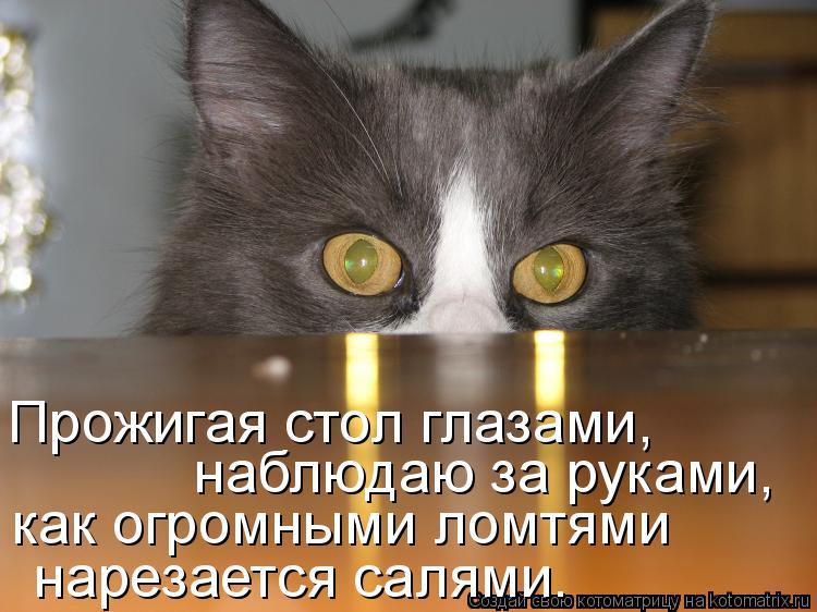 Котоматрица: Прожигая стол глазами, наблюдаю за руками, как огромными ломтями нарезается салями.