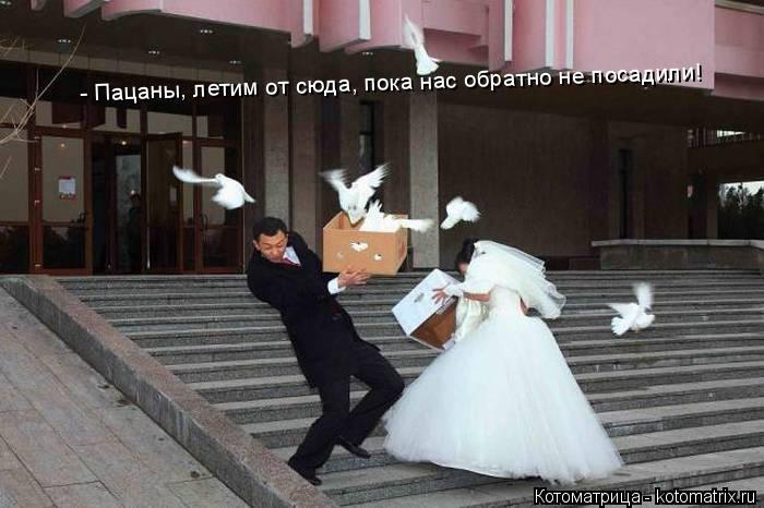 Котоматрица: - Пацаны, летим от сюда!  - Пацаны, летим от сюда, пока нас обратно не посадили!