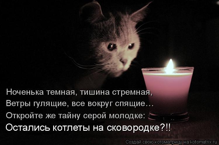 Котоматрица: Ноченька темная, тишина стремная, Ветры гулящие, все вокруг спящие…  Откройте же тайну серой молодке: Остались котлеты на сковородке?!!